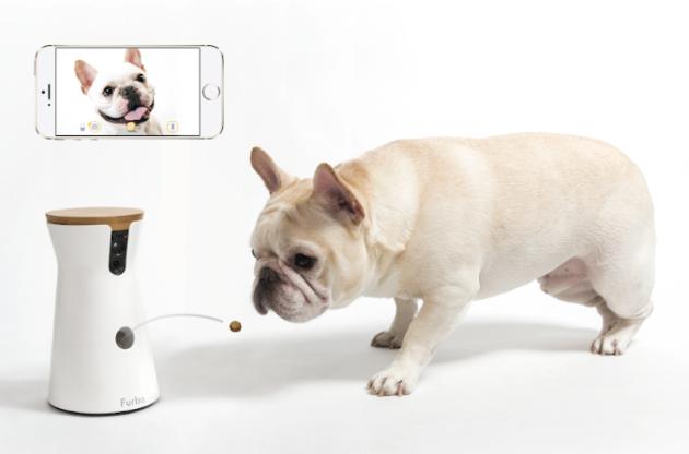 The Ellen effect: Dog camera startup sees sales soar after