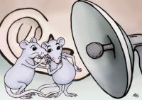 Mouse vocalizations