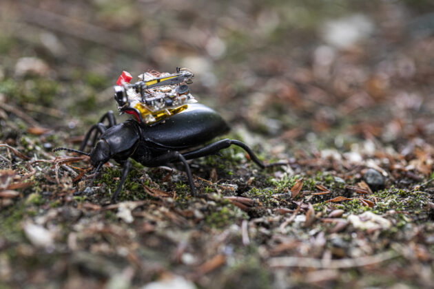 Get a bug's eye view from a tiny 'beetle backpack' camera