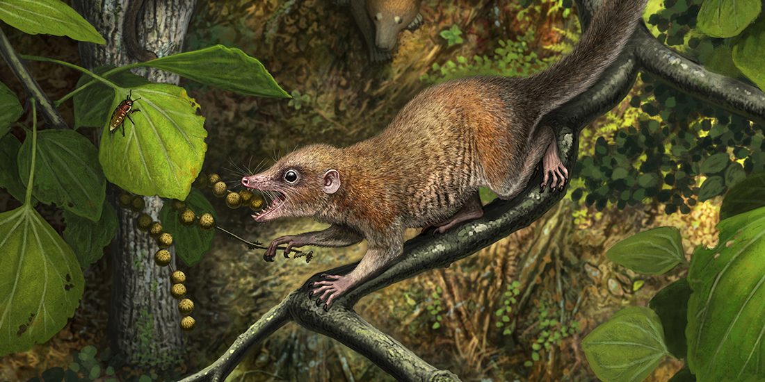 Paleontologists use fossilized teeth to flesh out ancient tale of earliest primates