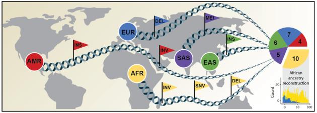 Human genome diversity