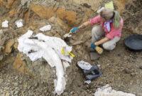 Excavating dinosaur fossil